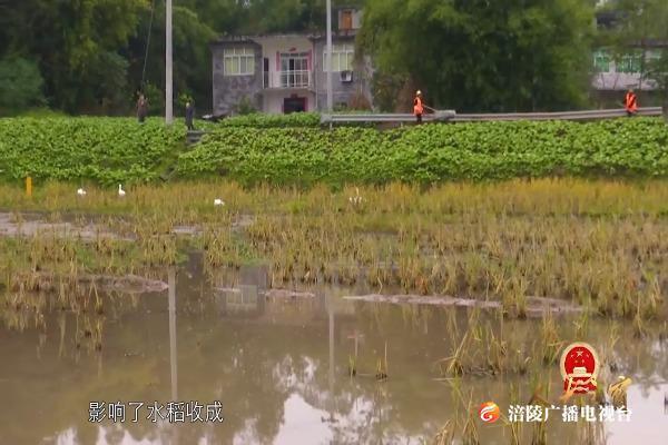 涪陵故事:污水影响水稻收成,人大代表来解决