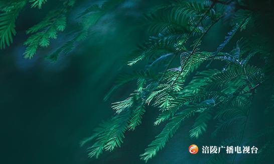 《江城悦读会》 | 一株清明草,淡香润诗魂