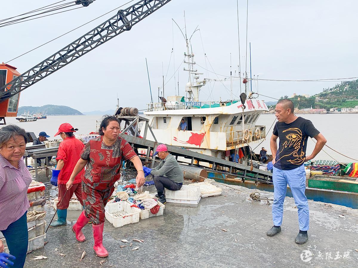 坎门鹰东码头 渔货丰收